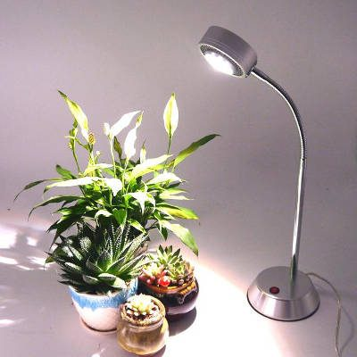Growing Plants With A Desk Lamp Simple Guide For Everyone